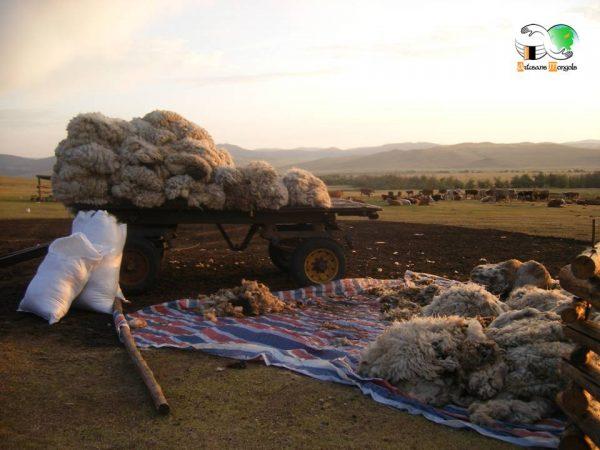 Chargement des balles de laine sur la remorque